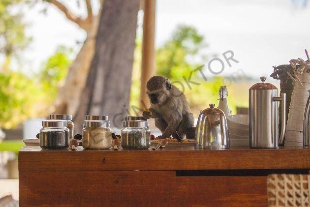 Afrika'nın ruhunu Botswana'da keşfettim 14