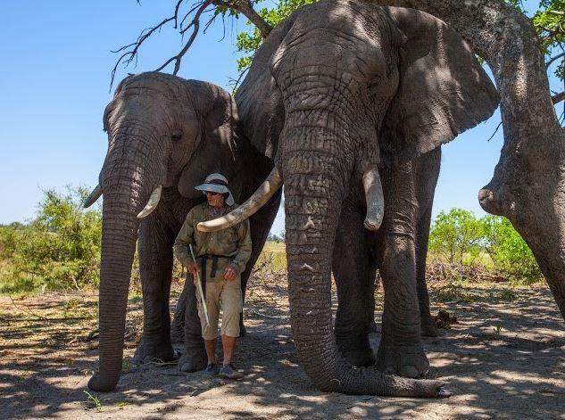 Fillere adanan bir yaşam 2