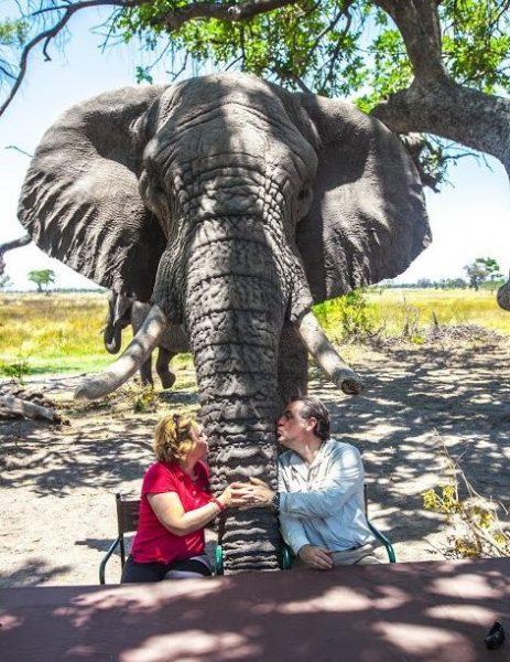 Fillere adanan bir yaşam 5