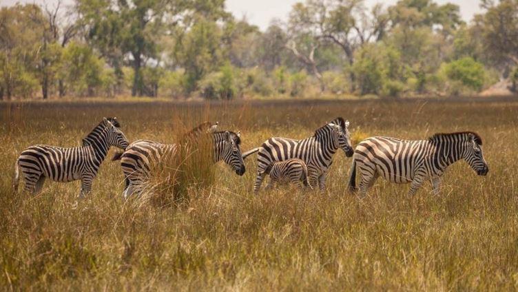 Zıtlıklar ülkesi Botswana 5