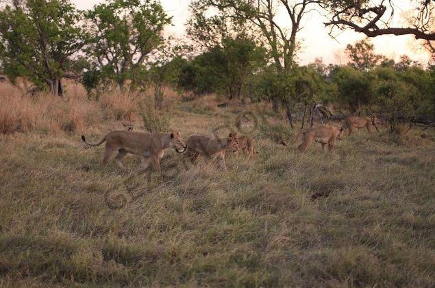 Zıtlıklar ülkesi Botswana 9