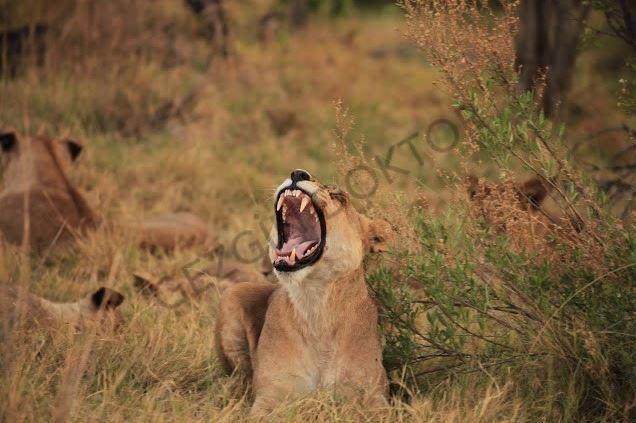 Zıtlıklar ülkesi Botswana 10