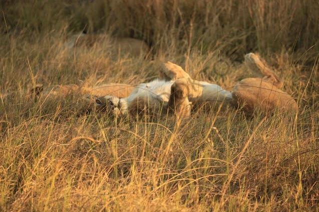 Zıtlıklar ülkesi Botswana 11
