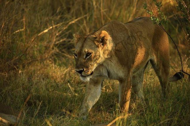 Zıtlıklar ülkesi Botswana 12