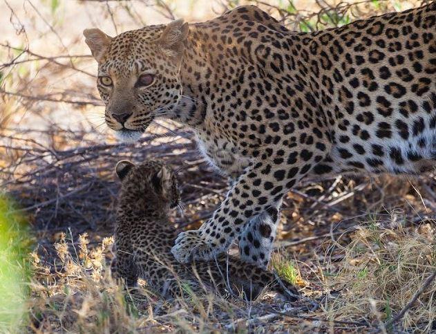 Zıtlıklar ülkesi Botswana 15