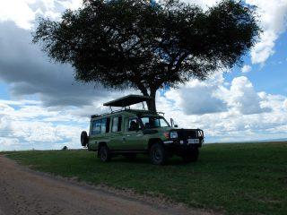 Safari Fotoğrafları